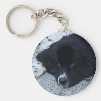 Precious Landseer Newfoundland gifts Key Chain