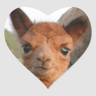 Precious Paca Baby Who Is Amazed at Everything! Heart Sticker