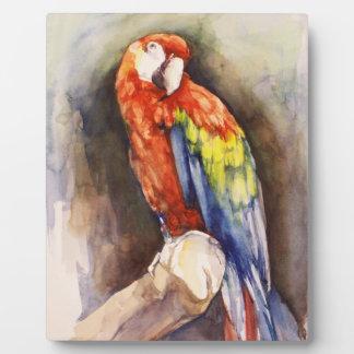 Precious Parrot  Plaque