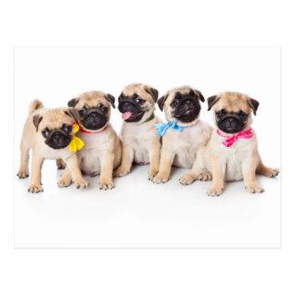 Precious Pug Puppies Postcard
