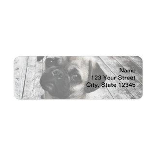 Precious Pug Puppy in Black and White Label