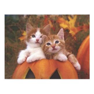 Precious Pumpkin Cats - Customizable Cards
