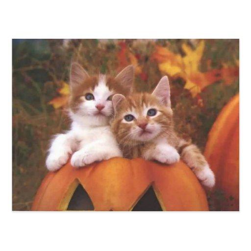 Precious Pumpkin Cats - Customizable Cards Postcards