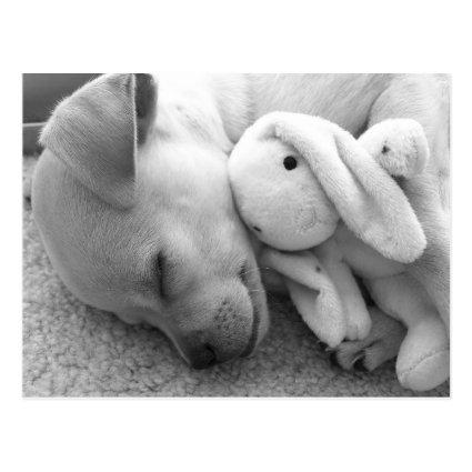 Precious Puppy Moment Dog Postcard