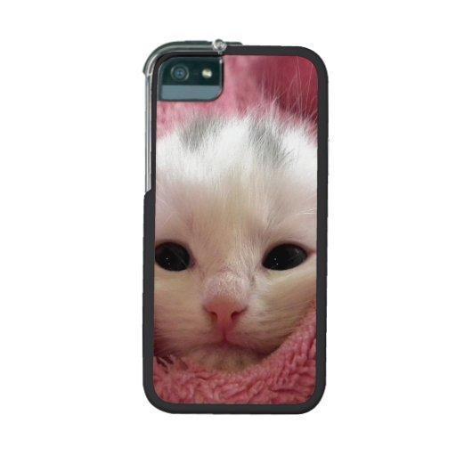 Precious White Kitten iPhone 5 Cases