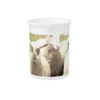 Precipitación de las ovejas jarras para bebida