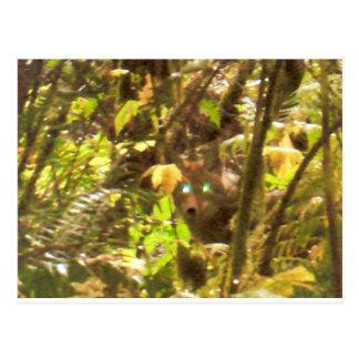 Predator in the Brush Woods Nature Photography Art Post Card