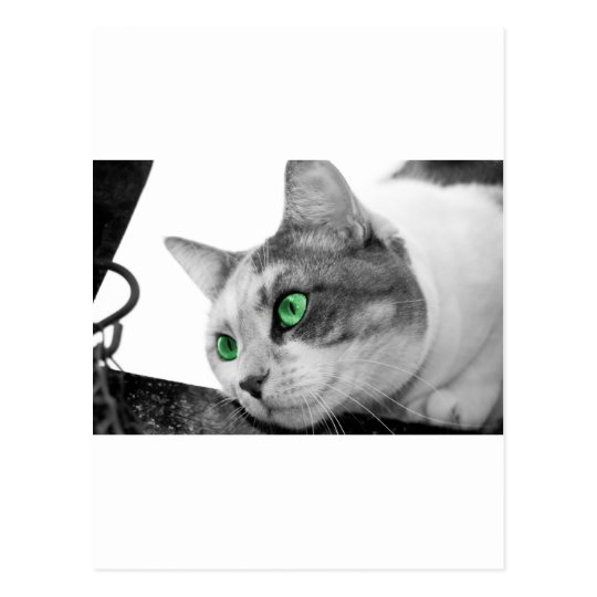 Predator's  eyes postcard