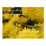 Predicador y crisantemos - postal #2