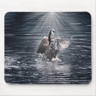 Preening Canada Goose & Water Wildlife Mouse Pad