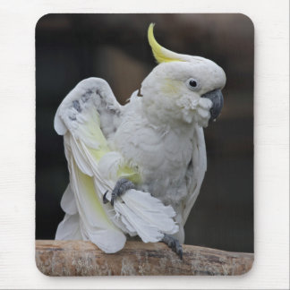 Preening Cockatoo Mousemat Mouse Pad