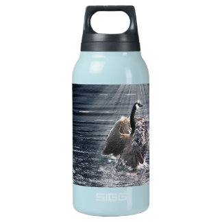 Preening, Flapping Canada Goose Photo Insulated Water Bottle
