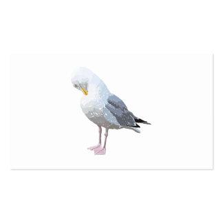 Preening Gull. Business Card