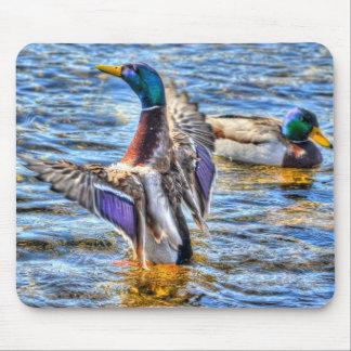 Preening Mallard Duck Birdlover Wildlife Mouse Pad