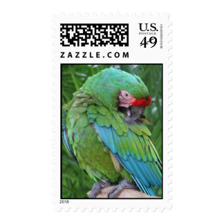 Preening Military Macaw Stamps