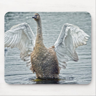 Preening Mute Swan Wildlife Waterfowl Photo Mouse Pad