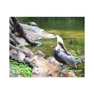 preening pelican slider turtle back photo c.jpg canvas print