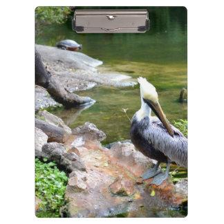 preening pelican slider turtle back photo c.jpg clipboard