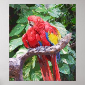 Preening Scarlet Macaw Art Print