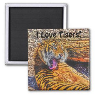 Preening Sumatran Tiger Big Cat Wildlife Art Magnet