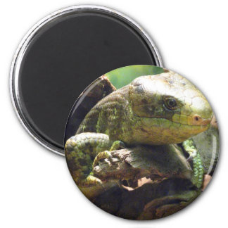 Prehensiled-Tailed Skink 2 Inch Round Magnet