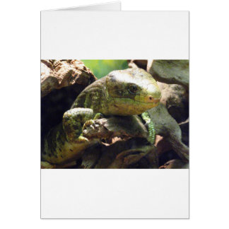 Prehensiled-Tailed Skink Card