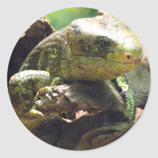 Prehensiled-Tailed Skink Classic Round Sticker