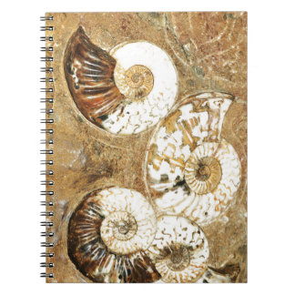 Prehistoric background with fossil shells notebook