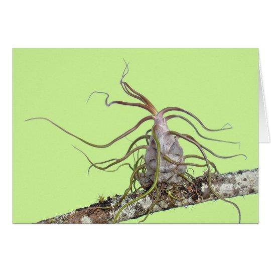 Prehistoric Bromeliad Card
