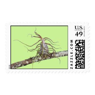 Prehistoric Bromeliad Postage