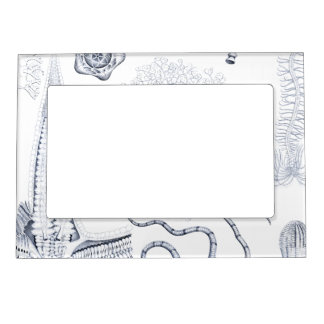 Prehistoric Sea Life - Crinoids, Ophiura Magnetic Picture Frame