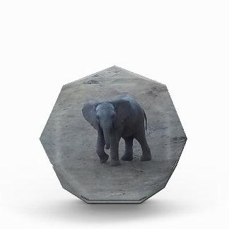 Premio del elefante del bebé
