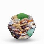 Premios de acrílico del octágono de los Seashells