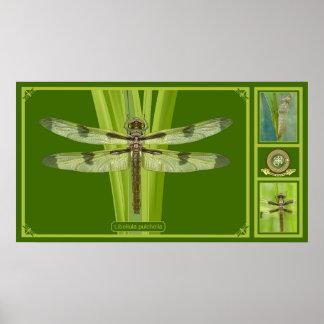 Premium Dragonfly Poster