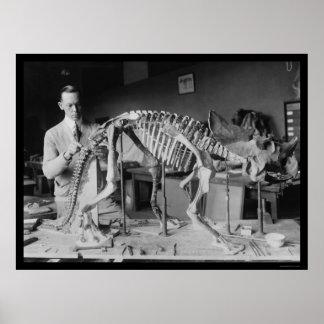 Preparación de un esqueleto 1921 del dinosaurio de poster
