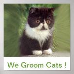 Preparamos la muestra de los gatos posters