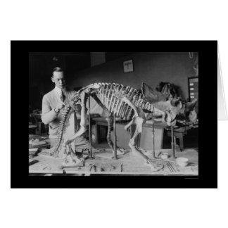 Preparing a Baby Dinosaur Skeleton 1921 Card