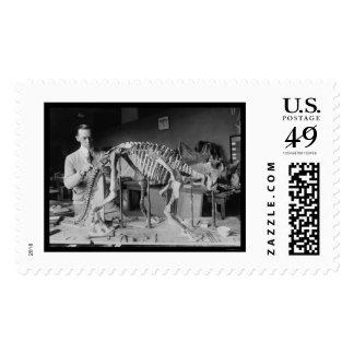 Preparing a Baby Dinosaur Skeleton 1921 Postage Stamps