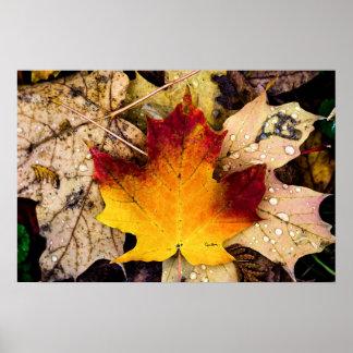 presencia del otoño posters