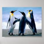 Presentación bonita de los pingüinos posters