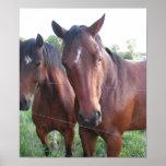 Presentación de caballos impresiones