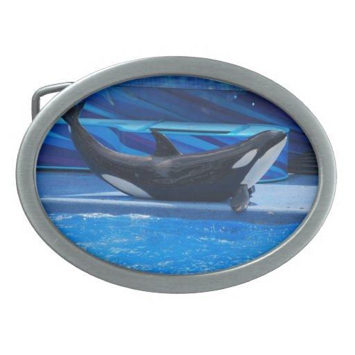 Presentación de la hebilla del cinturón de la orca hebillas de cinturón ovales