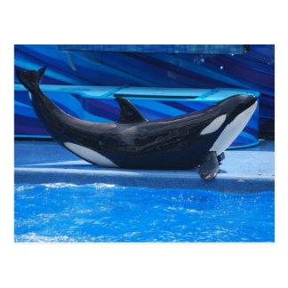 Presentación de la postal de la orca
