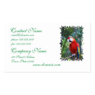 Presentación de tarjetas de visita del loro