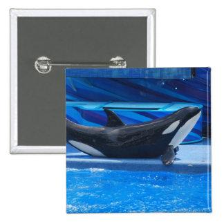 Presentación del botón de la orca pin