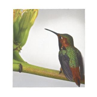 Presentación del colibrí blocs de papel