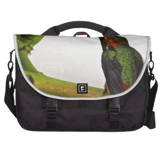 Presentación del colibrí bolsas de portatil