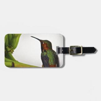 Presentación del colibrí etiquetas para equipaje