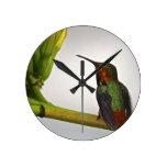 Presentación del colibrí relojes de pared