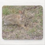 Presentación del conejito del bebé tapetes de raton
